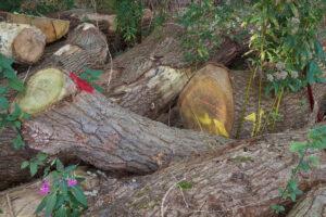 inkoop hout